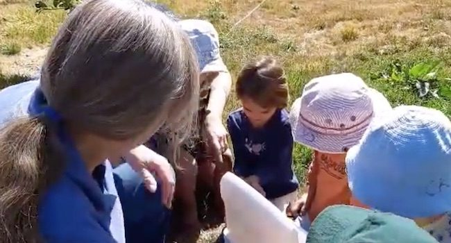 Image Of Children Watching Butterflies Being Released